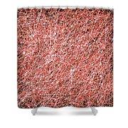 Canvas3723 Shower Curtain