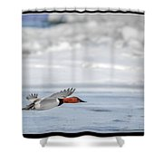 Canvasback Duck On Ice Shower Curtain