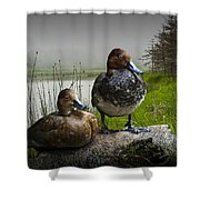 Canvasback Duck Pair By A Pond Shower Curtain