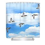 Canvasback Ducks In Flight Shower Curtain