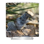 Canyon Squirrel Shower Curtain
