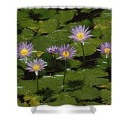 Cape Blue Water-lily Group Blooming Shower Curtain
