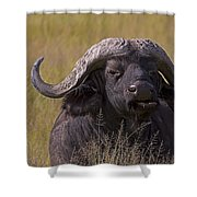 Cape Buffalo   #0574 Shower Curtain