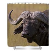 Cape Buffalo   #0607 Shower Curtain