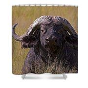 Cape Buffalo   #0609 Shower Curtain