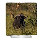 Cape Buffalo   #6851 Shower Curtain