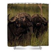 Cape Buffalo   #6884 Shower Curtain