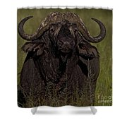 Cape Buffalo   #6885 Shower Curtain