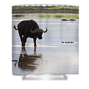 Cape Buffalo And Baby Eygptian Geese   #0375 Shower Curtain