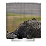 Cape Buffalo And Bird   #9873 Shower Curtain