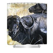 Da206 Cape Buffalo By Daniel Adams Shower Curtain
