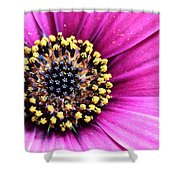 Cape Daisy Close Up Shower Curtain
