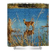 Cape Hatteras Deer In Pond 3 11/22 Shower Curtain