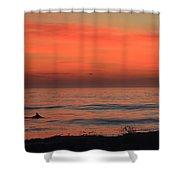 Cape Hatteras Dolphin 2 Shower Curtain