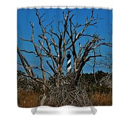 Cape Hatteras Lighthouse Through The Trees 3/01 Shower Curtain