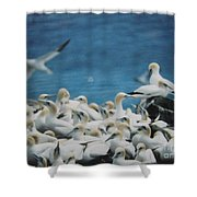 Cape St. Mary Ecological Resrve Shower Curtain