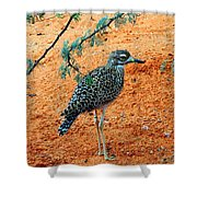 Cape Thick-knee Shower Curtain