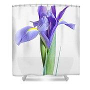 Captivate Shower Curtain