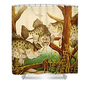 Captivating Crappies Shower Curtain by Bruce Bley