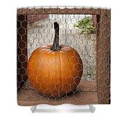 Captive Pumpkins Shower Curtain