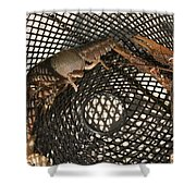 Captured Crawdaddies Shower Curtain