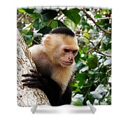 Capuchin Monkey Shower Curtain