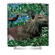 Capybara And Jacana Shower Curtain by Francois Gohier