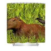 Capybara And Smooth Billed Ani Shower Curtain