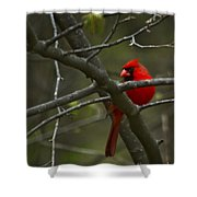 Cardinal   #5032 Shower Curtain