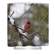 Cardinal - A Winter Bird Shower Curtain