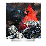 Cardinal And Evergreen Shower Curtain