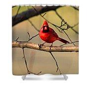 Cardinal Beauty Shower Curtain