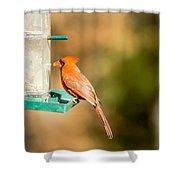 Cardinal Bird At Bird-feeder Shower Curtain