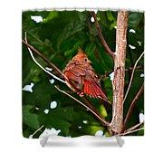 Cardinal Bird Baby Shower Curtain