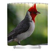 Cardinal Bird Shower Curtain