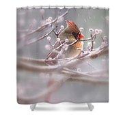 Cardinal - Bird - Lady In The Rain Shower Curtain
