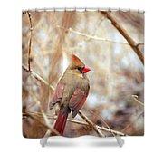 Cardinal Birds Female Shower Curtain