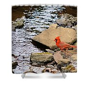 Cardinal By The Creek Shower Curtain