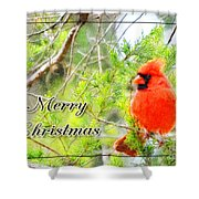 Cardinal Christas Card Shower Curtain