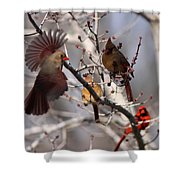 Cardinal Colony Shower Curtain