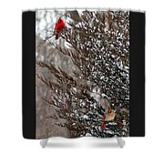 Cardinal Couple In Evergreen Shower Curtain
