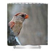 Cardinal Eye Shower Curtain