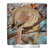 Cardinal Female Shower Curtain