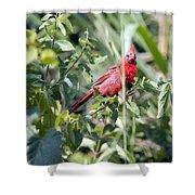 Cardinal In Bush I Shower Curtain