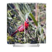 Cardinal In Bush Iv Shower Curtain