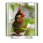 Cardinal In Dogwood Shower Curtain