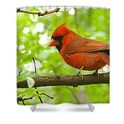 Cardinal In Red Shower Curtain