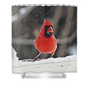 Cardinal In Snowstorm Shower Curtain