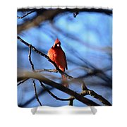 Cardinal In The Midst Shower Curtain