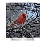 Cardinal In The Rain   Shower Curtain